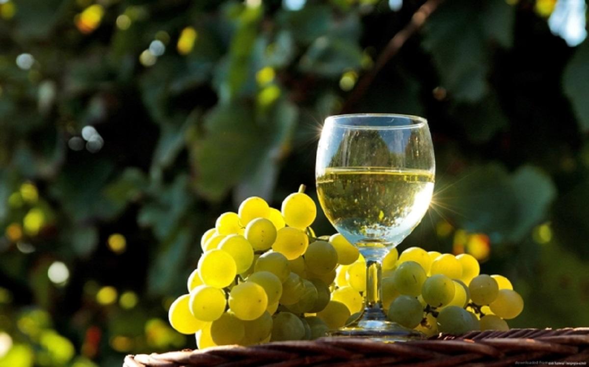 Primeira edição de prova internacional de vinhos brancos marcada para julho em Monção
