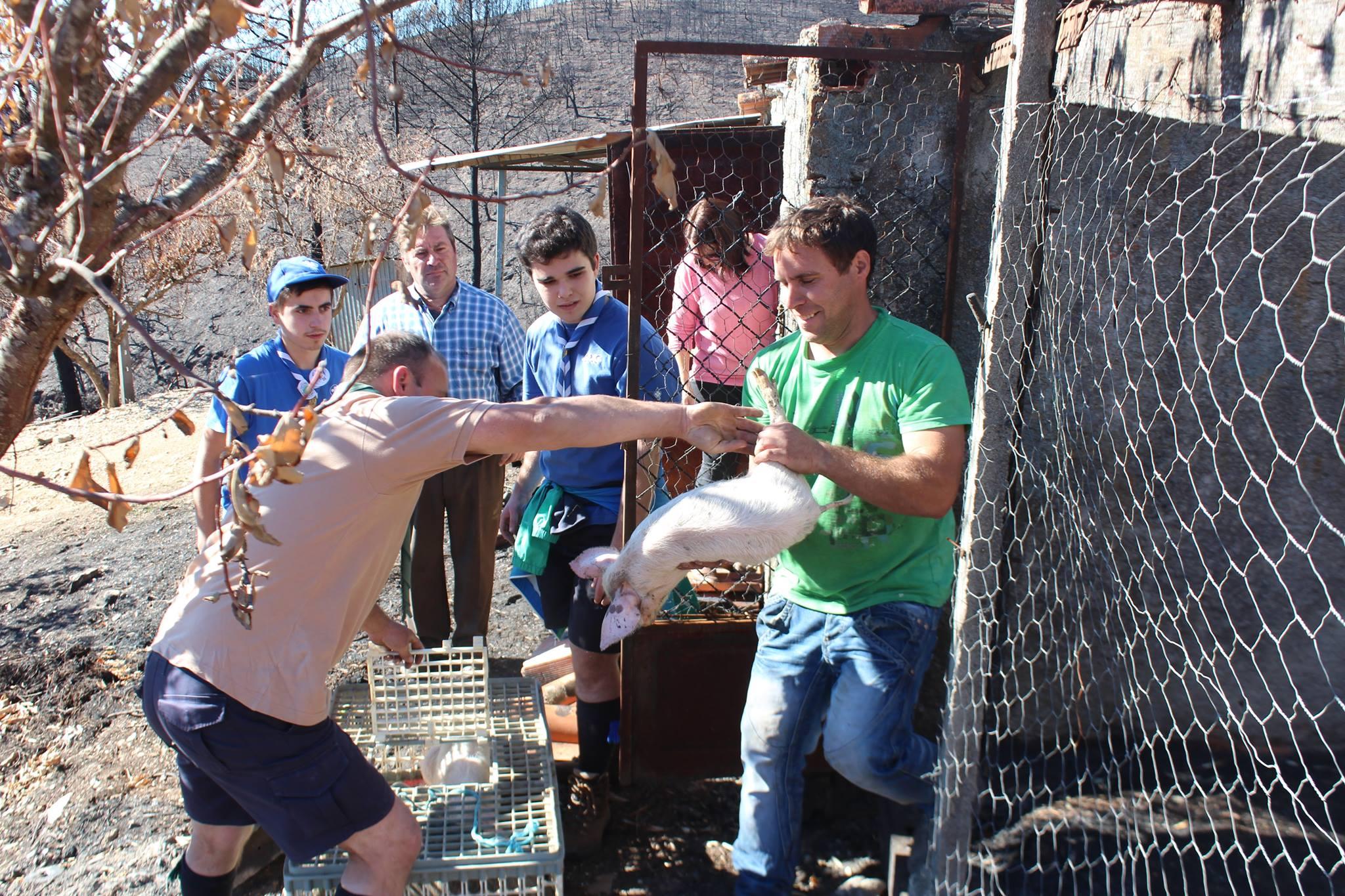 Incêndios : Escuteiros de Ponte de Lima entregam cerca de 25 toneladas de bens em Pampilhosa da Serra
