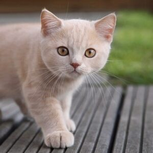 """Porque é que os """"gatos têm sete vidas""""?"""