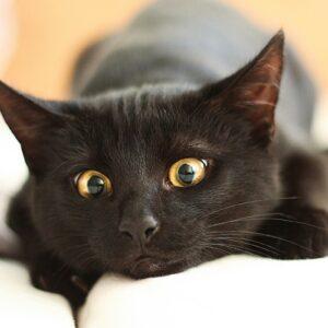 """Hoje é o """"Dia do Gato Preto"""""""