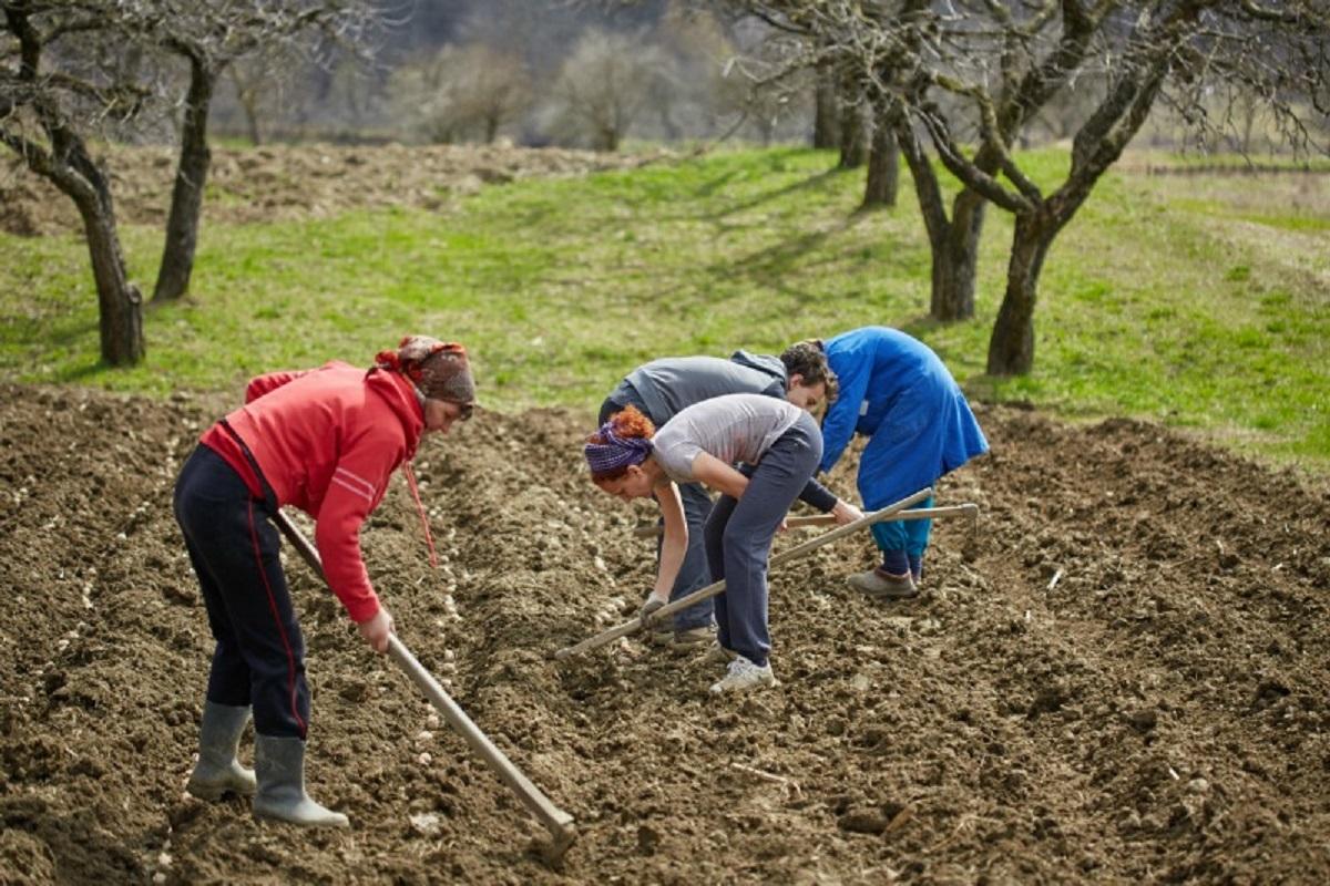Estatuto da Agricultura Familiar vai beneficiar 100 mil produtores