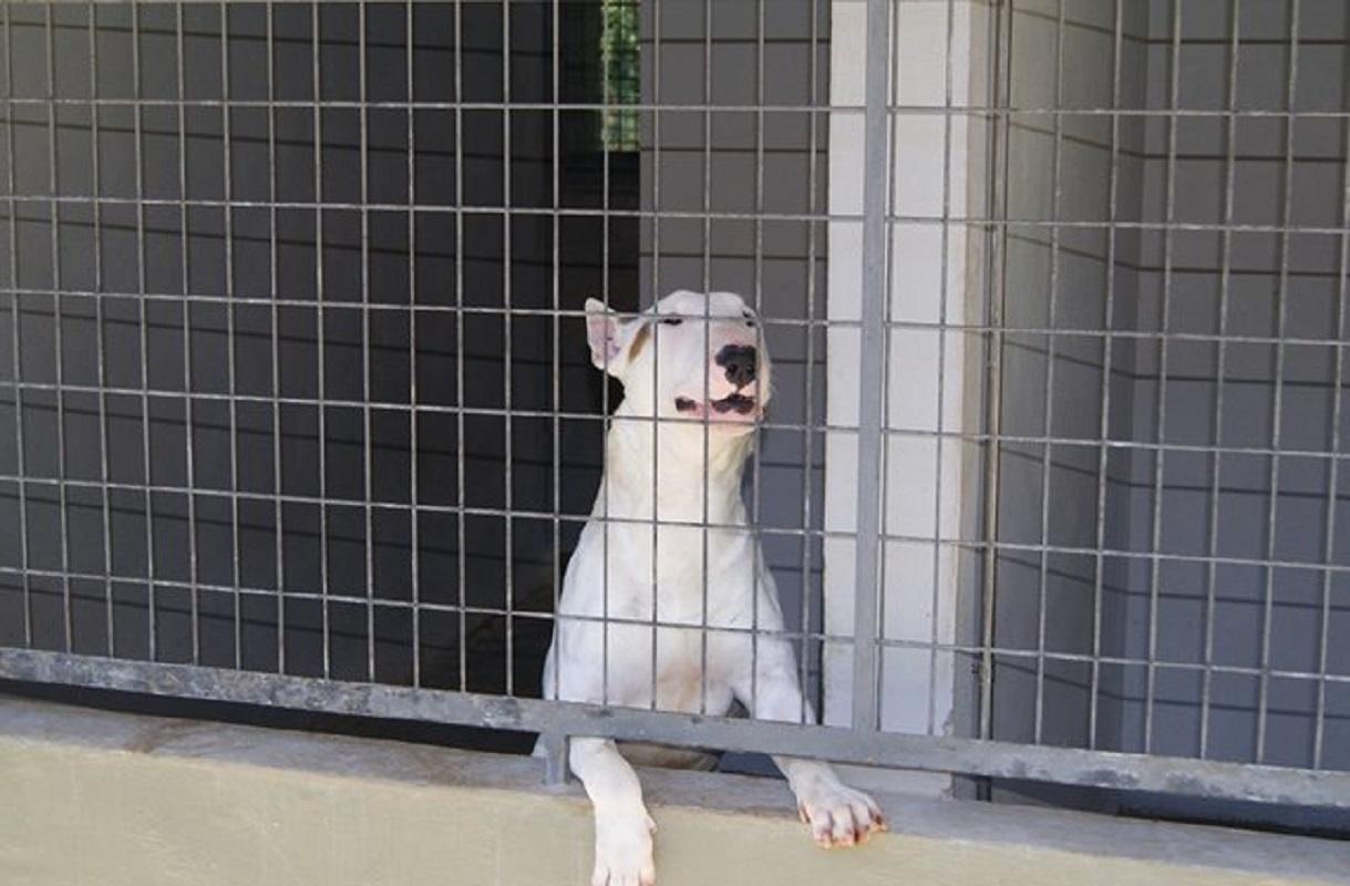 Lei que proíbe o abate de animais nos canis municipais entra hoje em vigor