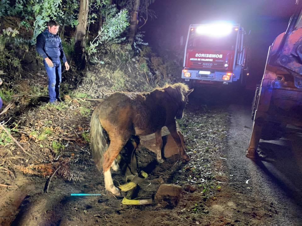 Bombeiros de Arcos de Valdevez resgatam cavalo com mais de 200 quilos de aqueduto