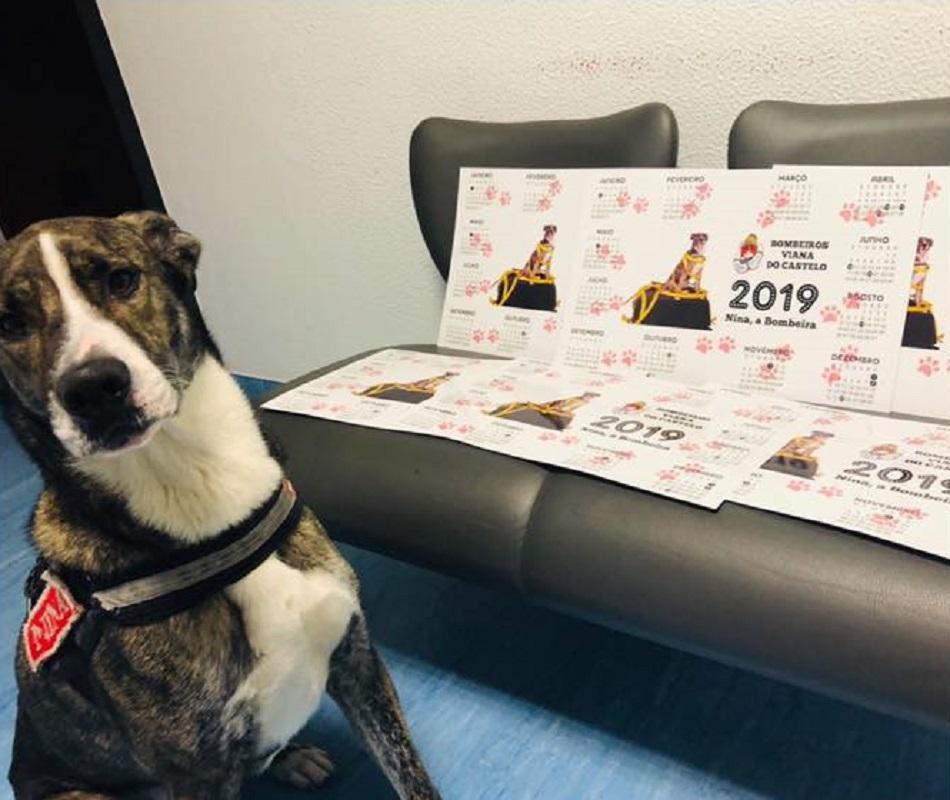 Calendário solidário da cadela Nina já está à venda para ajudar bombeiros voluntários e Vila Animal