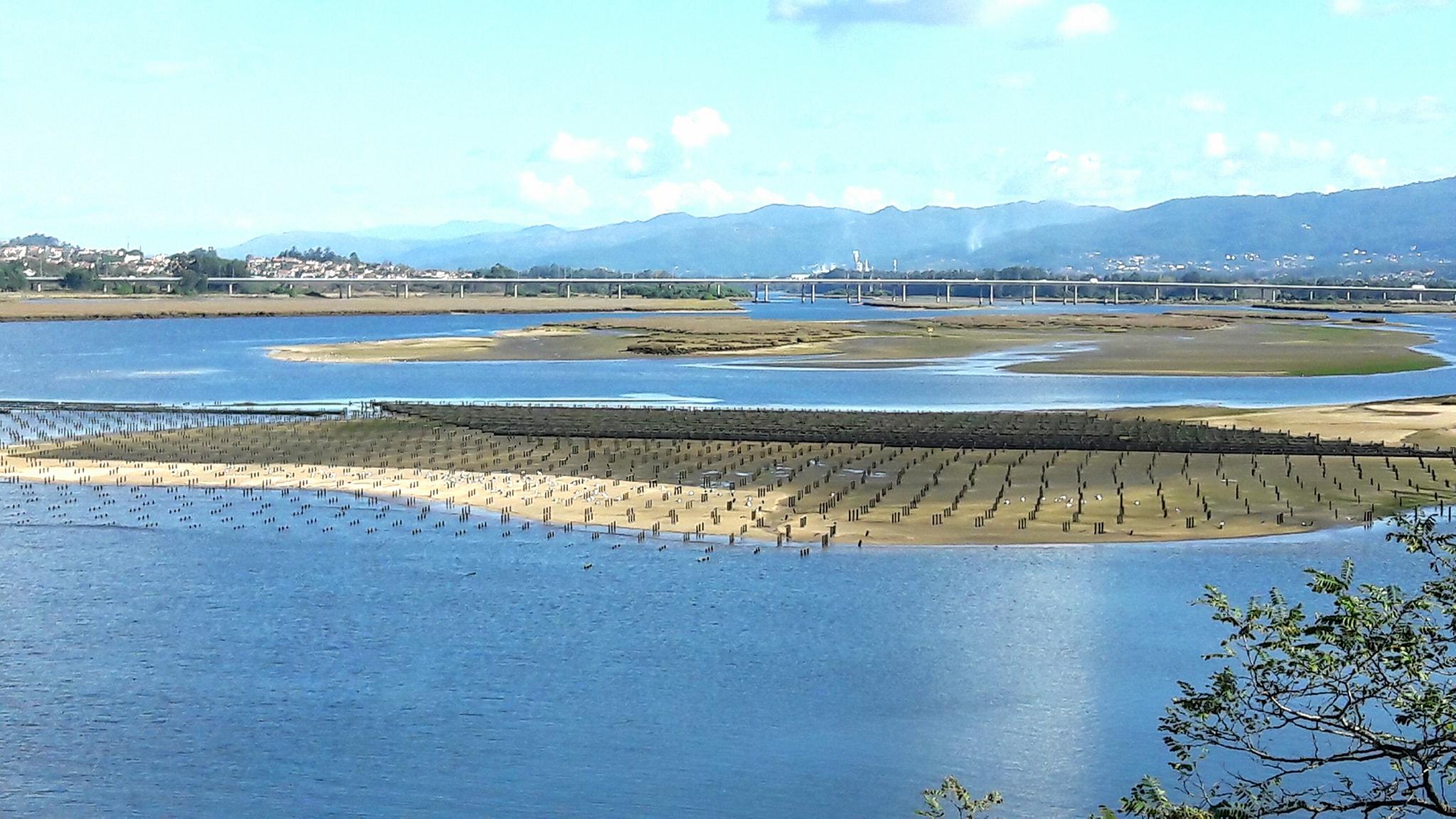 Cerca de 200 toneladas de ostras 'Made In Viana' vão sair, todos anos, do rio Lima
