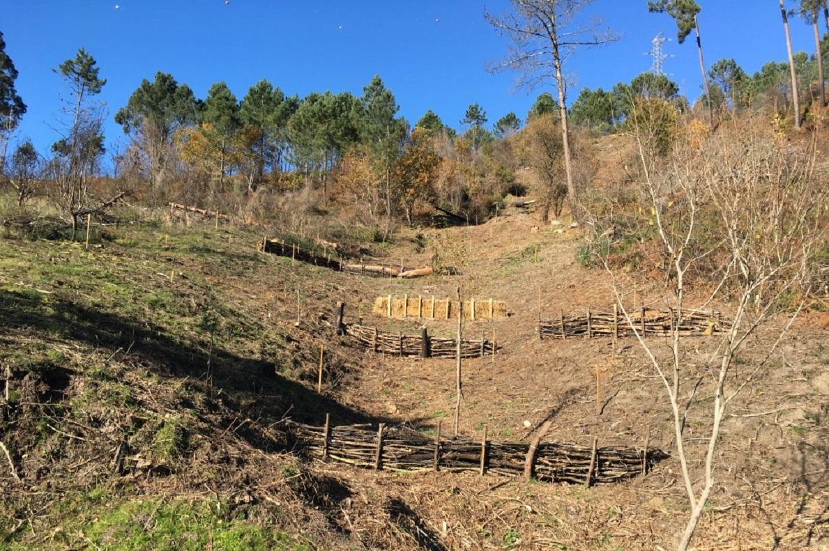 Recuperadas zonas ribeirinhas em Arcos de Valdevez afetadas por incêndios florestais
