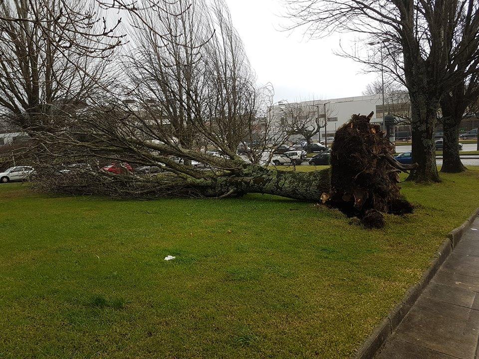 Mau tempo provoca 12 quedas de árvore e corta circulação na Linha do Minho em Caminha