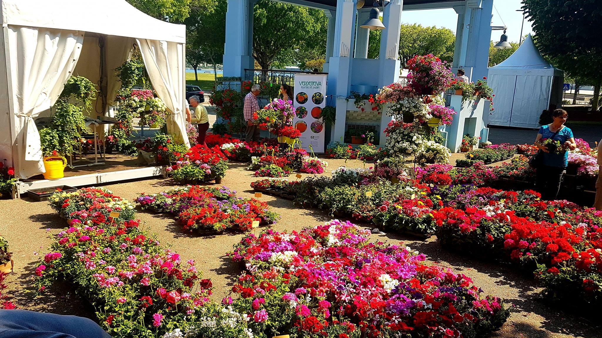 Feira das Flores e Jardinagem decorre de sexta-feira a domingo no jardim público de Viana