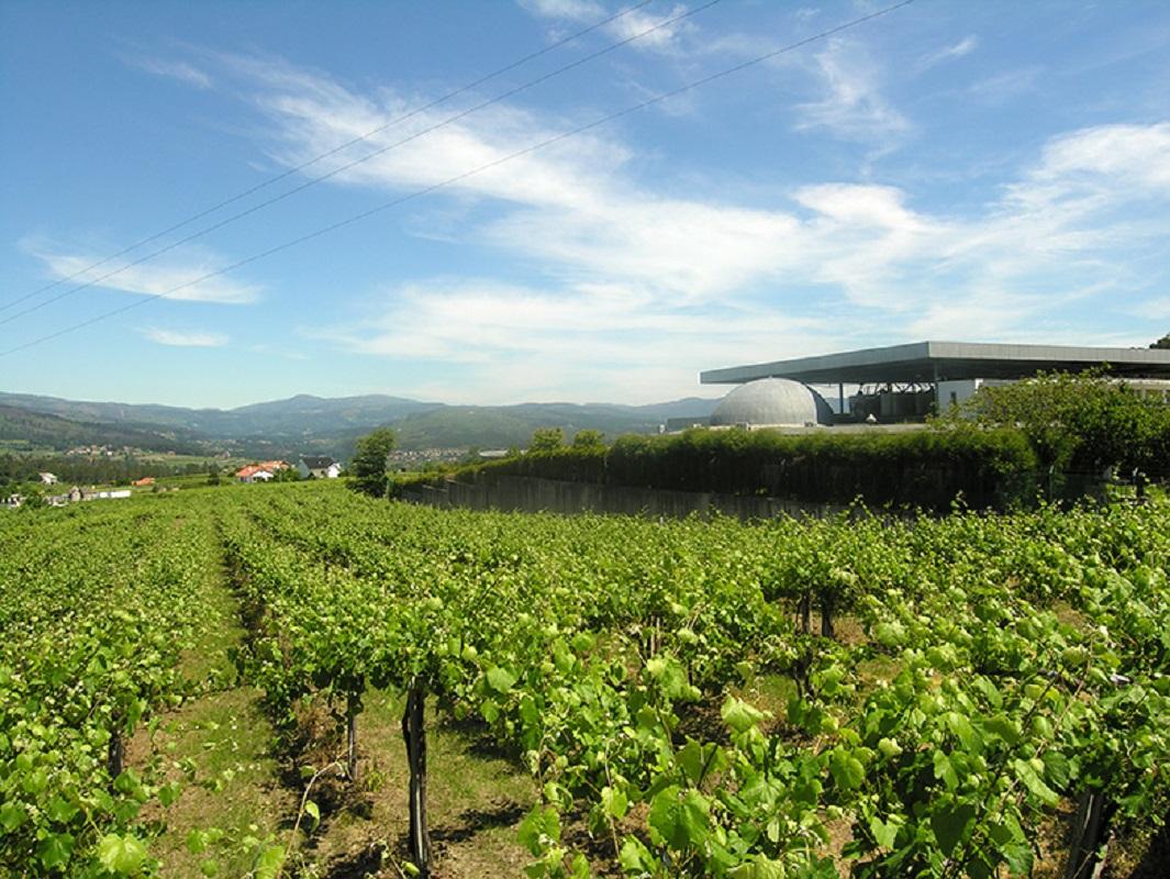 Adega Quintas de Melgaço celebra 25 anos  de produção de vinho Alvarinho