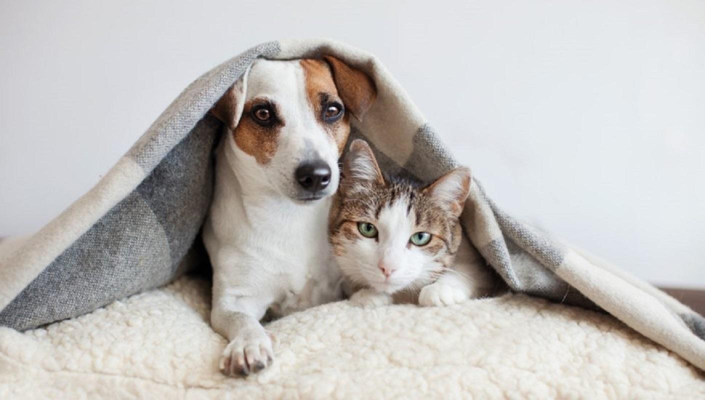 Os cães e gatos não se suportam?