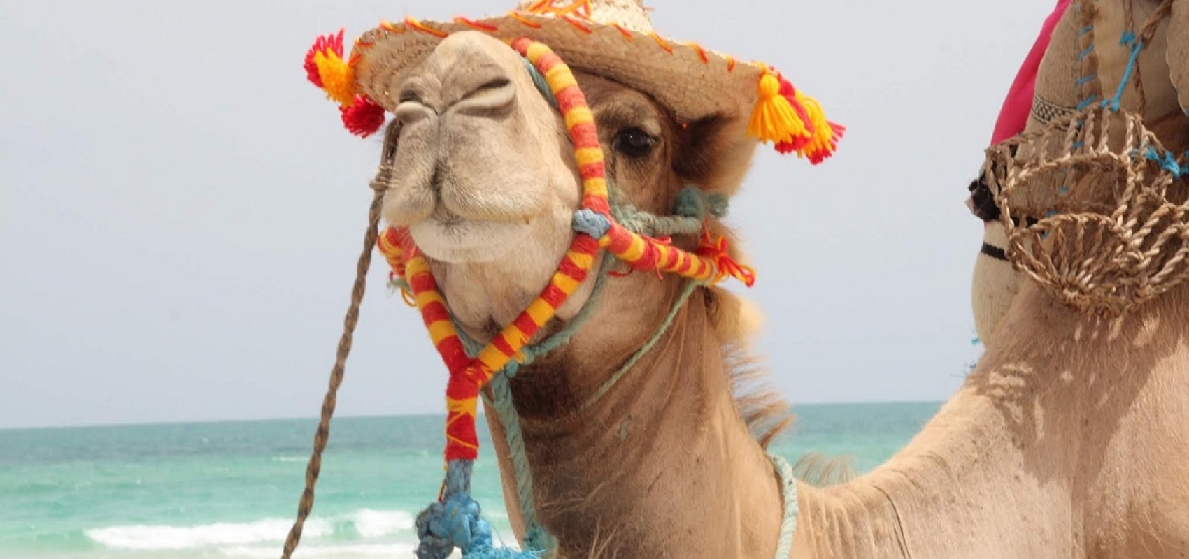 Passeios de Camelo e neve dão magia ao Natal de Vila Nova de Cerveira