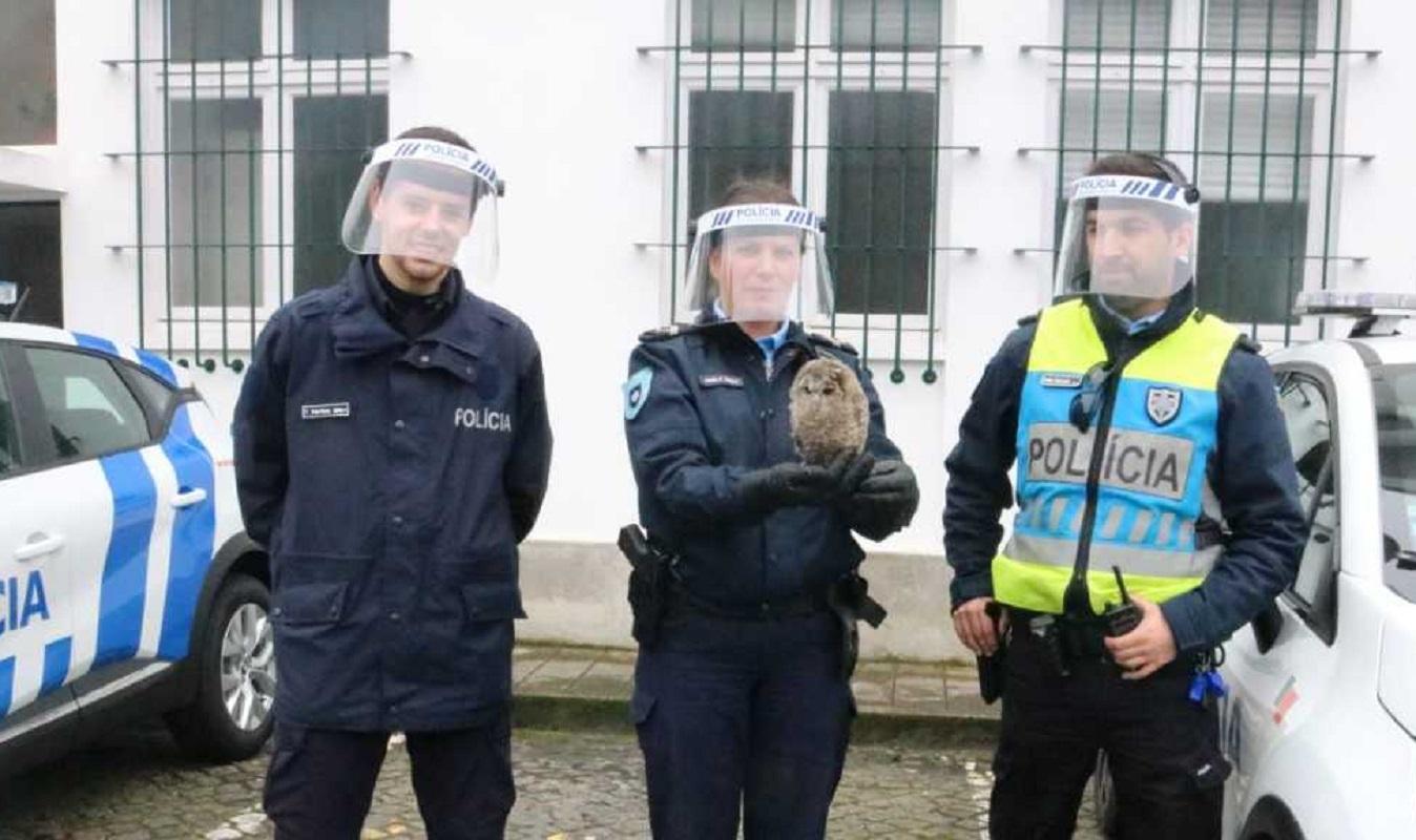 PSP recolhe coruja em perigo no Cabedelo