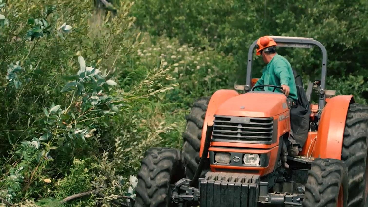 EDP Distribuição desenvolve projetos na defesa e proteção do património florestal