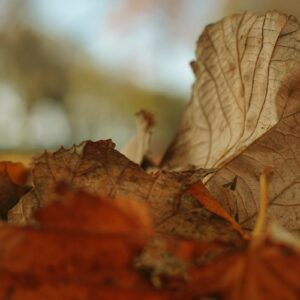 Começou hoje o outono