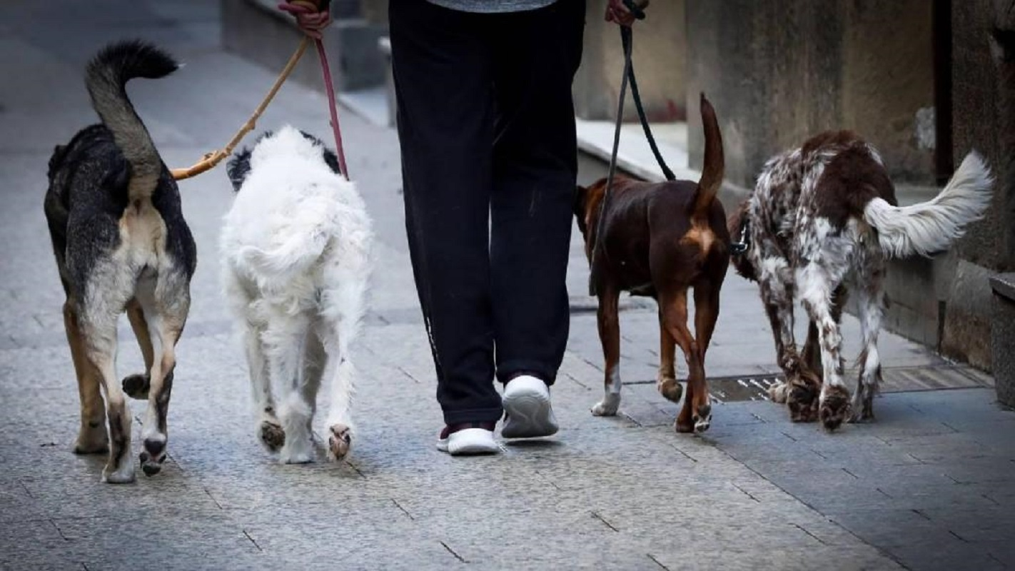 Viana do Castelo: Cardielos vai ter Centro de Acolhimento Temporário para Animais